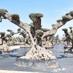 Oivo Monumental Ginart Oleas