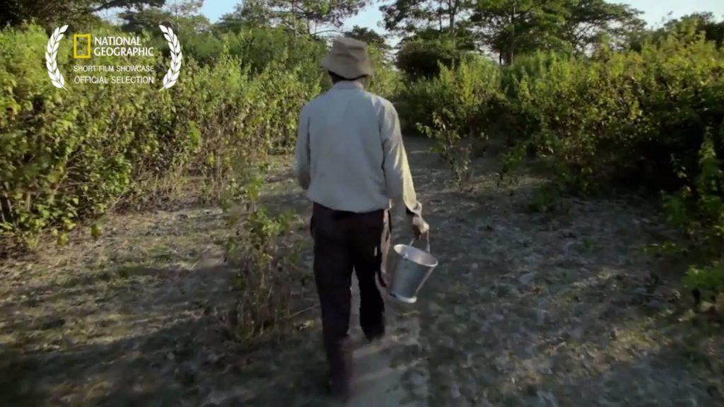 Forest Ginart Oleas Árboles Milenarios