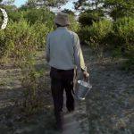 Durante 37 Años Este Hombre Plantó Un Árbol al Día. Mira lo que Ocurrió.
