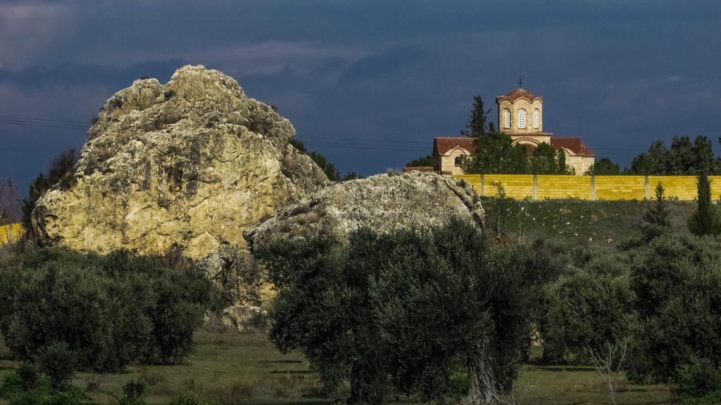 Olivos Ornamentales Ginart Oleas