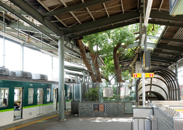 Árbol de gran Porte en Estación en Japón (1)