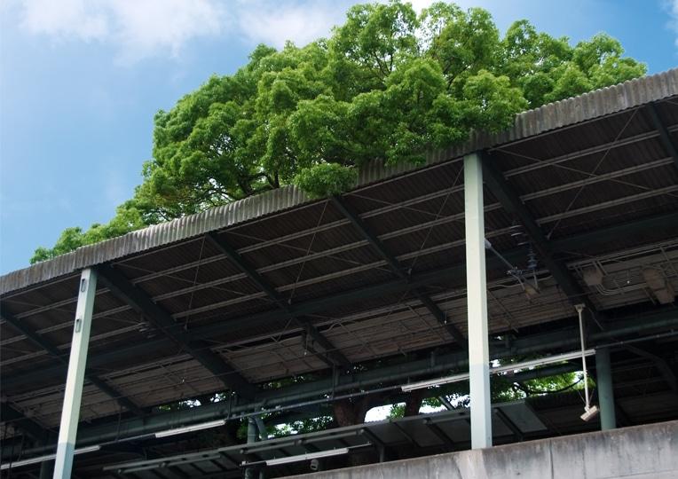 Árbol de gran Porte en Estación en Japón (2)