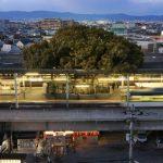Esta Estación Está Construida Alrededor de Un Árbol de Más de 700 Años.