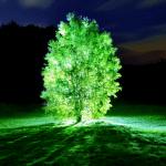¿Árboles y Plantas Que Brillan?