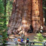 El Árbol Más Grande (Conocido) del Mundo