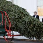 Como NO Transportar un Árbol de Navidad Absurdamente Grande