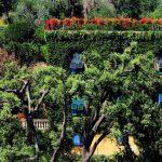 [VÍDEO] Cosas Asombrosas Sobre Los Árboles Que No Sabías