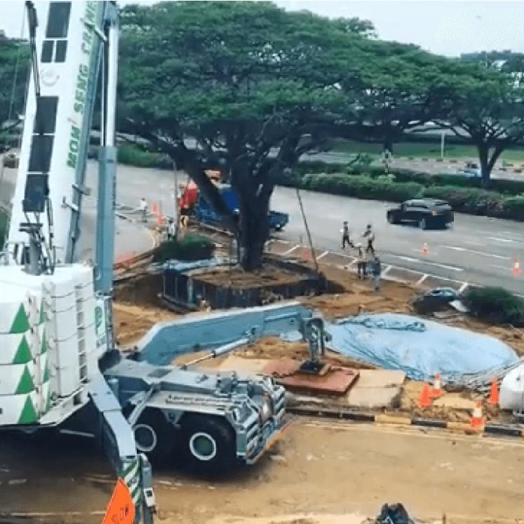 Arbol siendo transportado en Singapur