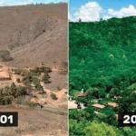 Una Pareja Planta 2 Millones de Árboles Durante 20 Años y Restauran un Bosque