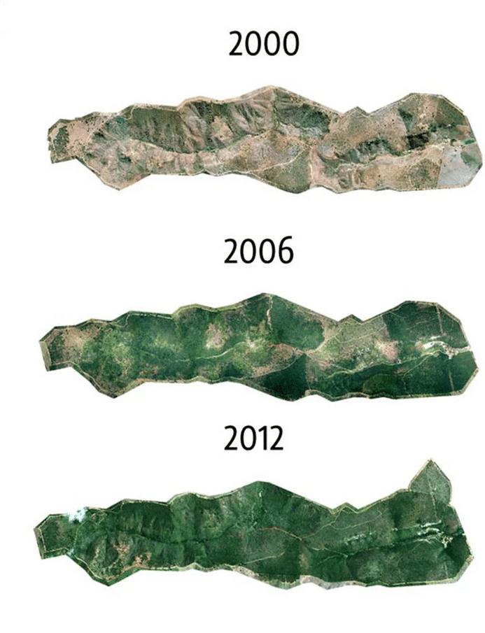 evolucion paisaje bosque arboles